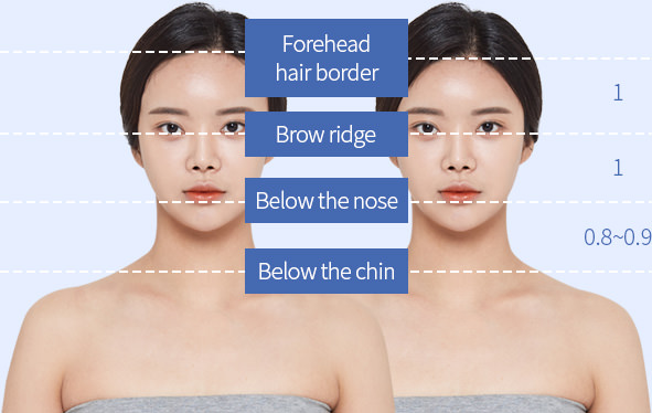 Forehead hair border - Brow ridge - Below the nose - Below the chin
