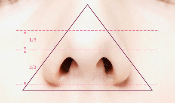 Ideal Nose Tip Location and Proportions